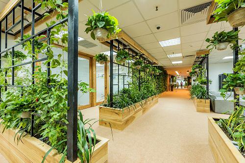 Mẫu thiết kế nội thất văn phòng đẹp tràn ngập ánh sáng và cây xanh ở Hà Nội - 5