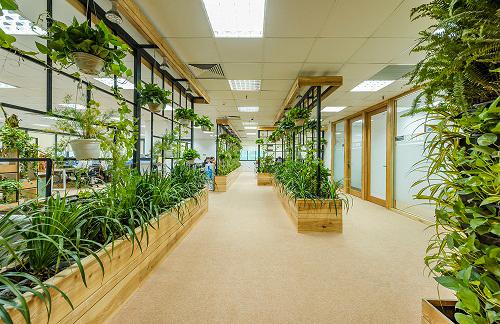 Mẫu thiết kế nội thất văn phòng đẹp tràn ngập ánh sáng và cây xanh ở Hà Nội - 6