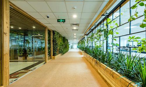 Mẫu thiết kế nội thất văn phòng đẹp tràn ngập ánh sáng và cây xanh ở Hà Nội - 7