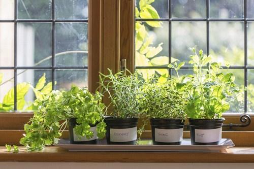 Tư vấn thiết kế vườn rau sạch an toàn cho gia đình-1