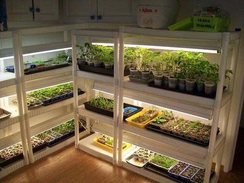 Tư vấn thiết kế vườn rau sạch an toàn cho gia đình-2