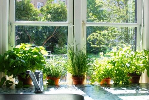 Tư vấn thiết kế vườn rau sạch an toàn cho gia đình-3