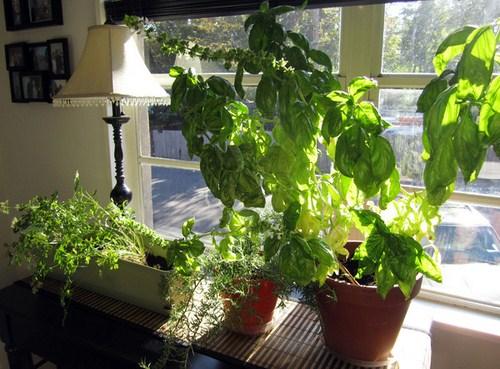 Tư vấn thiết kế vườn rau sạch an toàn cho gia đình-5