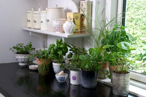 Tư vấn thiết kế vườn rau sạch an toàn cho gia đình-9