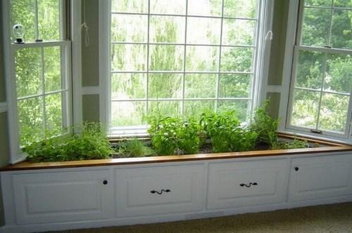 Tư vấn thiết kế vườn rau sạch an toàn cho gia đình-10