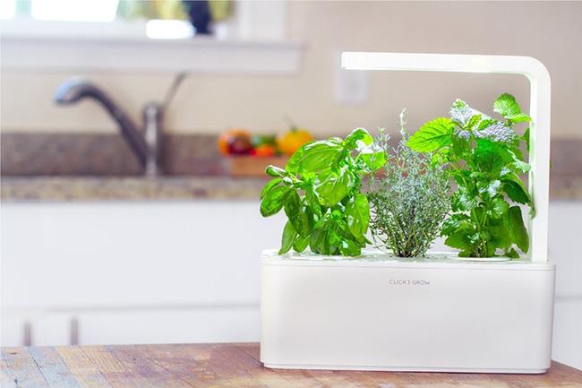 15 mẫu chậu trồng cây hiện đại trang trí cho nhà nhỏ - 05