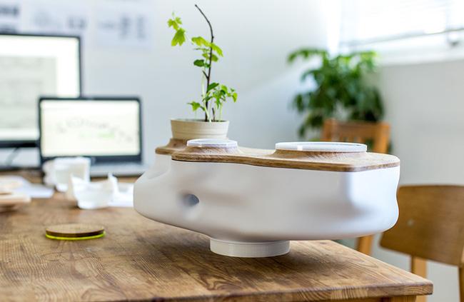 15 mẫu chậu trồng cây hiện đại trang trí cho nhà nhỏ - 07