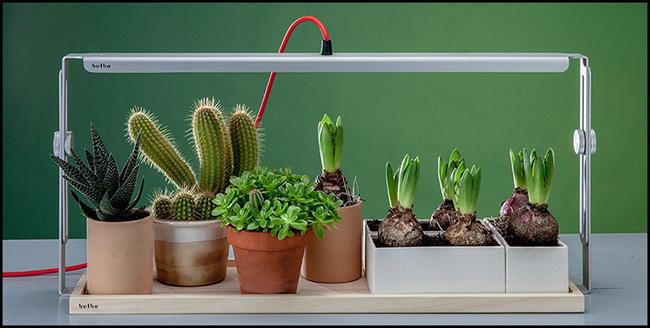 15 mẫu chậu trồng cây hiện đại trang trí cho nhà nhỏ - 10