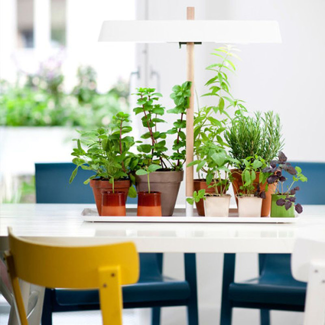 15 mẫu chậu trồng cây hiện đại trang trí cho nhà nhỏ - 11