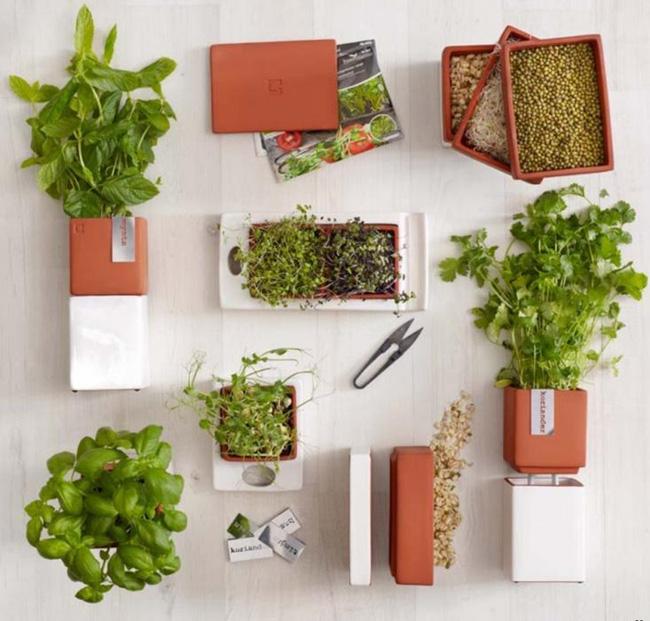 15 mẫu chậu trồng cây hiện đại trang trí cho nhà nhỏ - 12