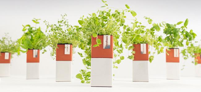 15 mẫu chậu trồng cây hiện đại trang trí cho nhà nhỏ - 13