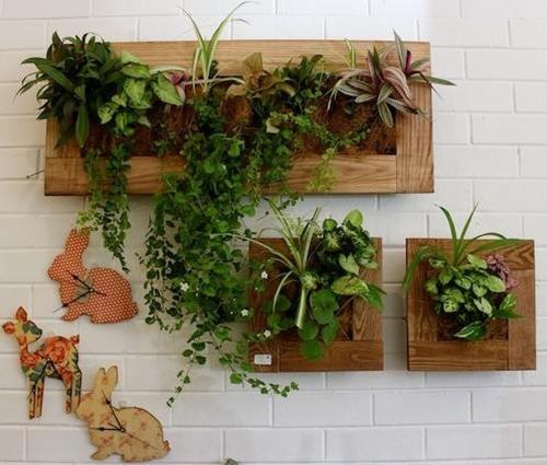 Độc đáo với giải pháp trồng cây trên tường cho nhà chật chội