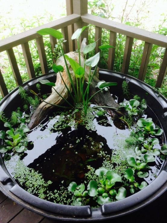 Mách bạn ý tưởng trang trí sân vườn bằng chậu tiểu cảnh mini