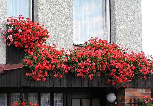 Làm đẹp cho nhà phố với cách trang trí ban công đơn giản bằng hoa
