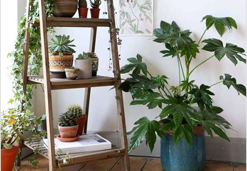 Mẹo trang trí nhà với cây xanh cực đơn giản mà bạn nên biết