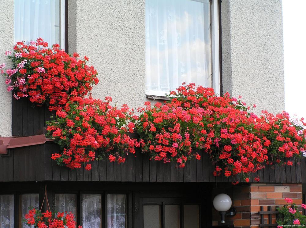 Nhà phố siêu xinh với mẹo trang trí ban công đẹp bằng hoa04